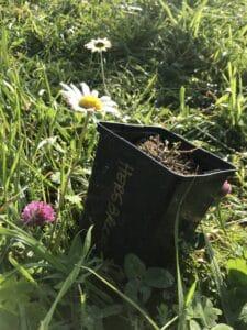 Un pot de houblon avant plantation